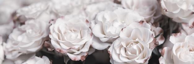 Tle kwiatów. jasnożółte róże z różowymi płatkami