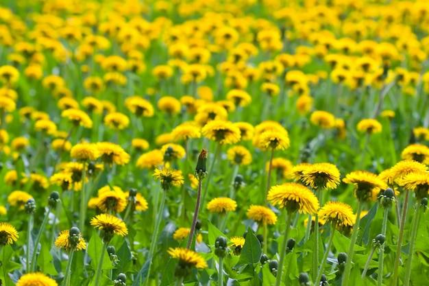 Tle kwiatów
