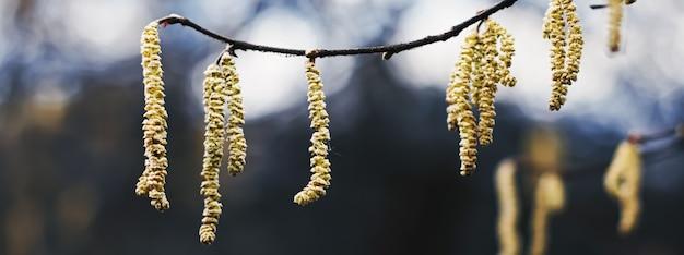 Tle przyrody wczesną wiosną lub jesienią w chłodne dni w ogrodzie botanicznym