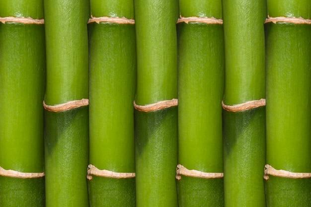 Tło bambusa