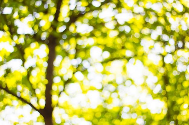 Tło bokeh od słońca w cieniu drzew.