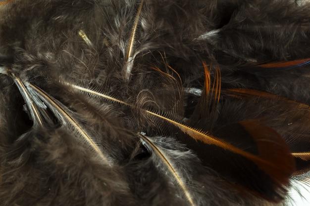 Tło brązowe pióra