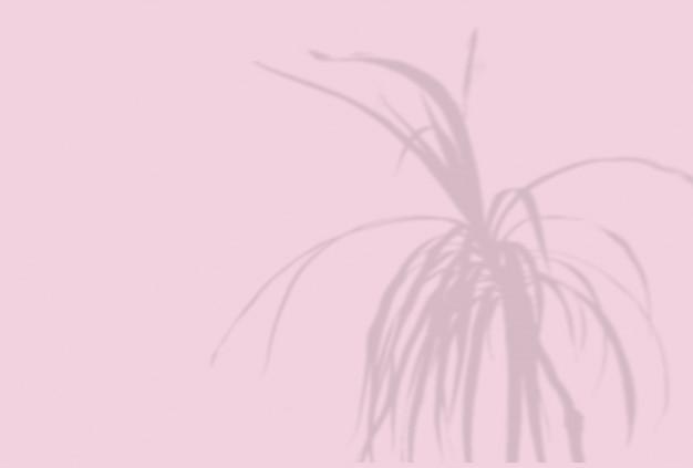 Tło cieni roślin