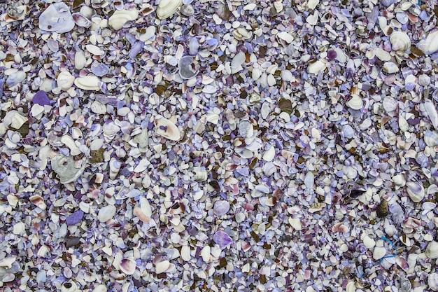 Tło cockleshell plaży. muszla tekstura tło. wielobarwne muszle na plaży
