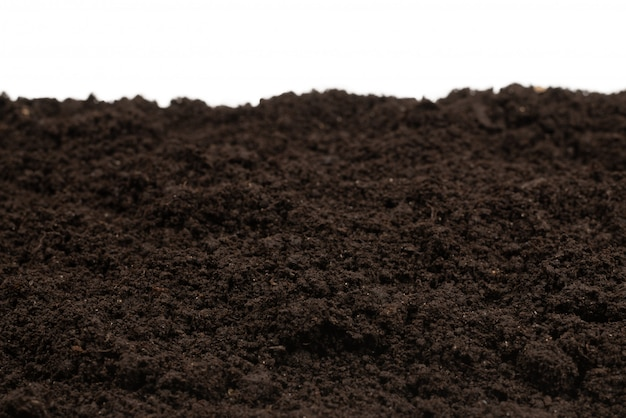 Tło czarne ziemi roślin.