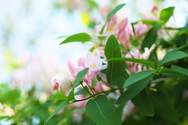 Tło dla projektu. lato wiosny. świeża i jasna zieleń. różowe kwiaty rozkwitły.