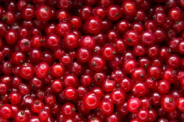 Tło dojrzałych jagód czerwonej porzeczki