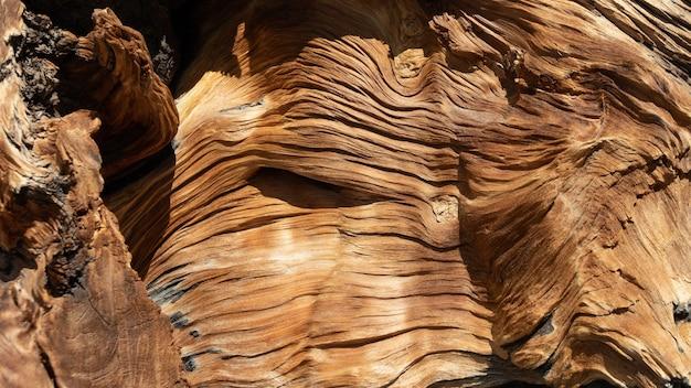 Tło drzewa porażonego piorunem