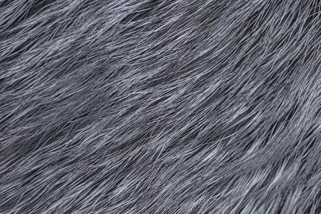 Tło futro lisa srebrnego. zamknij solidną teksturę.