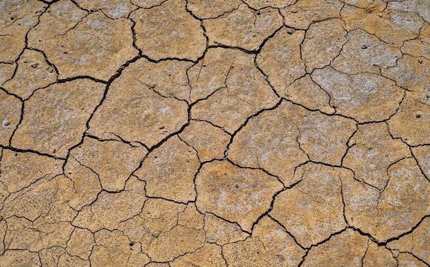 Tło gleby