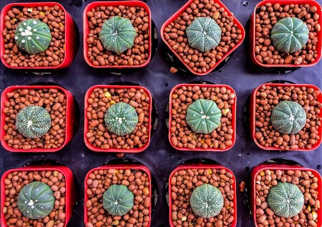 Tło i tekstura zielony kaktus w plastikowym garnku przy drzewnym rynkiem.