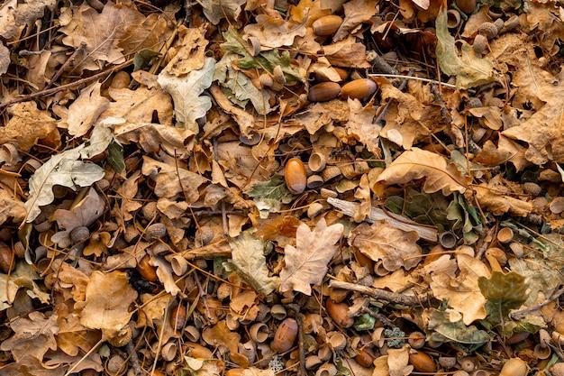 Tło jesień, opadłe liście dębu na podłodze.