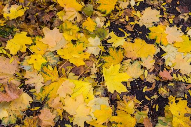 Tło jesiennych kolorowych liści