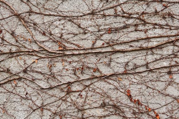 Tło - kamienny mur, pokryty naturalnym wzorem suchych zimowych pędów dzikich pnączy