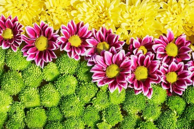 Tło kolorowe jesienne kwiaty. dywan z kolorowych kwiatów. widok z góry.
