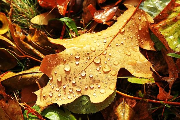 Tło kolorowe jesienne liście na ziemi