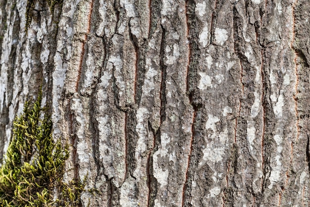 Tło kory drzewa