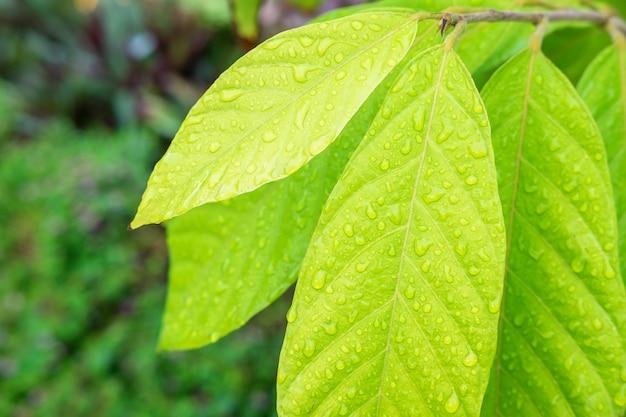 Tło krople deszczu na liściach