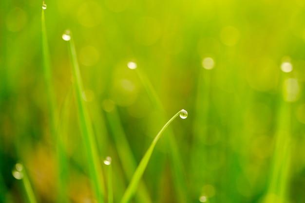 Tło kropli rosy na jasnozielonej trawie