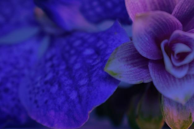 Tło kwiatów, urządzone w kolorze niebieskim, jasnofioletowym