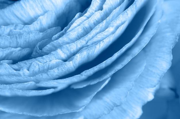 Tło kwiatowy. jaskier w modnym kolorze classic blue. makro zbliżenie kolorowe kartki z życzeniami, blog lifestyle, media społecznościowe, paleta. poziomy. kolor koncepcji roku 2020