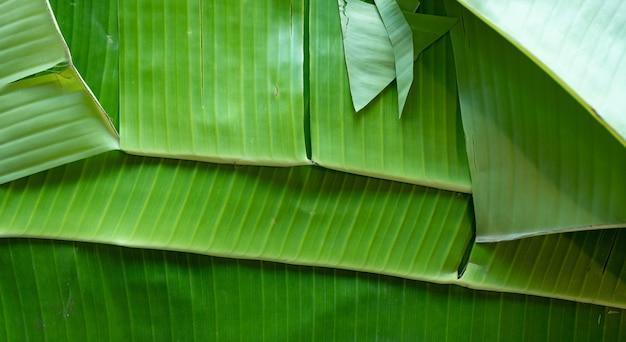 Tło liści bananowca