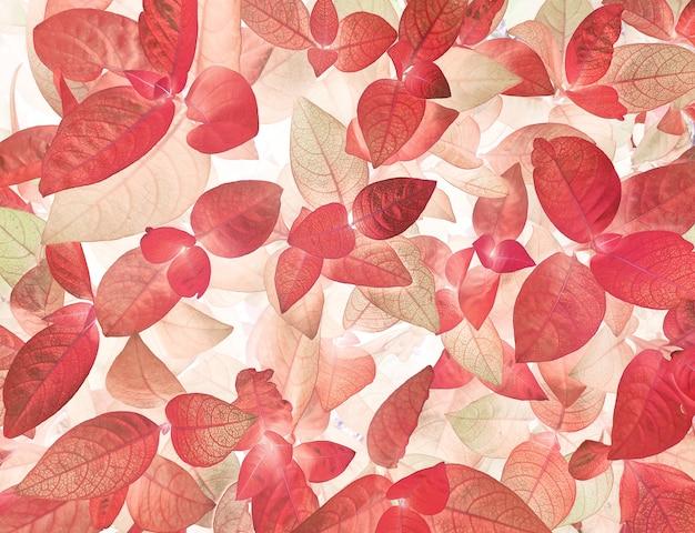 Tło liści czerwonych liści