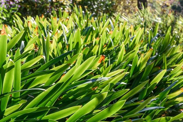 Tło liści roślin zielonych