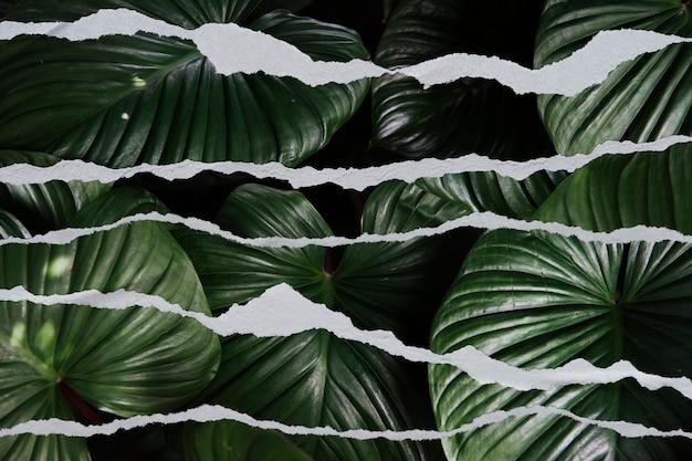 Tło liścia z rozdartym papierem