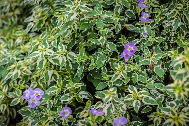 Tło liścia zielony krzak i kwiat
