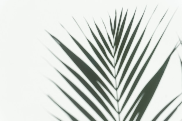 Tło nakładki cienia palmy rozmazany cień tropikalnej gałęzi palmy