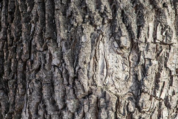 Tło naturalne kory drzewa
