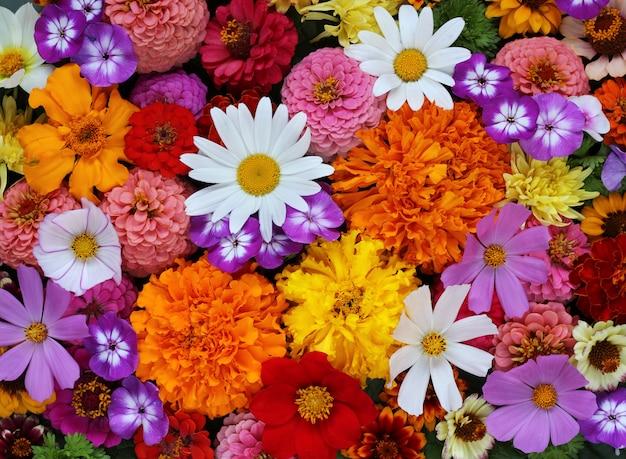 Tło ogrodowi kwiaty, odgórny widok. stokrotka, floks, dalie i inne.