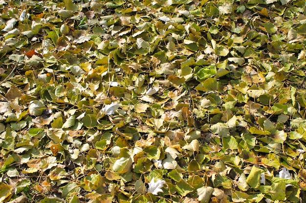 Tło opadłych suchych liści