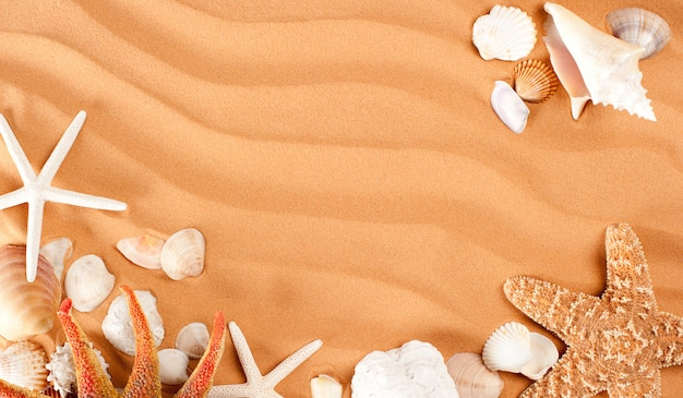 Tło piasek z muszli i rozgwiazdy