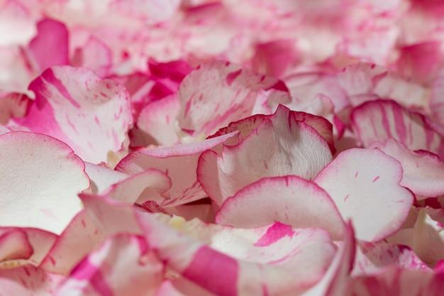 Tło pięknych naturalnych płatków róż clous-ap