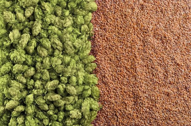 Tło piwa z mieszanką chmielu i pszenicy. góra widoku. szablon gotowy do prezentacji.