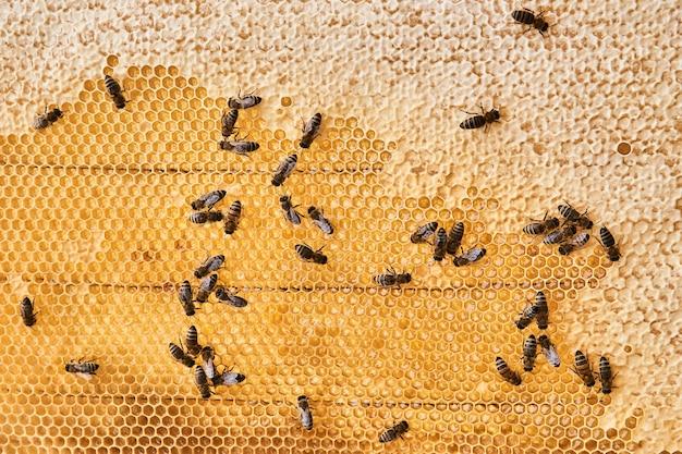 Tło - plastry miodu z miodem i pełzającymi po nich pszczołami, niektóre komórki są wypełnione i uszczelnione woskiem