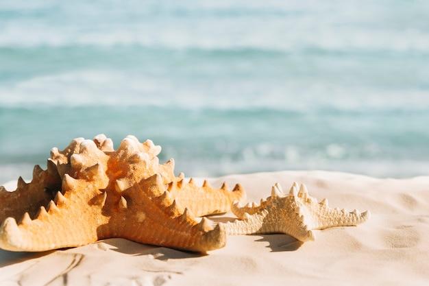 Tło plaża z rozgwiazdy