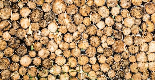 Tło pnie drzew. kawałki tła pnia drewna tekowego. okrągły kikut z drewna tekowego. okrągłe drzewa tekowe koło pniaków wycięte grupy. wylesianie.