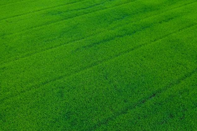 Tło pola, widok z góry krajobraz, przyroda