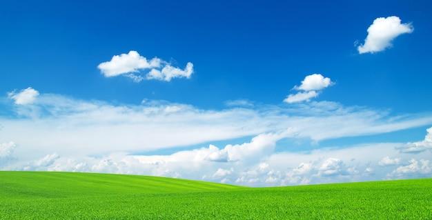 Tło pola z niebieskim niebem