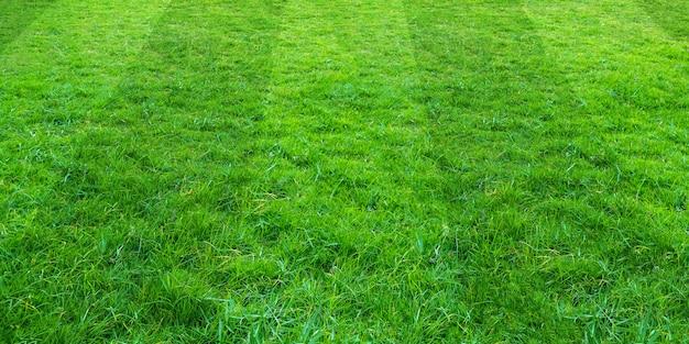 Tło pola zielonej trawy dla sportu piłki nożnej i piłki nożnej. zielony gazon tekstury tło.