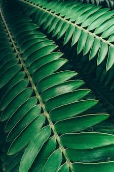 Tło rośliny dżungli. tropikalne zarośla i krzaki w dżungli.