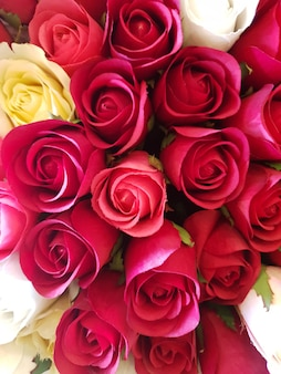 Tło różowe i czerwone róże.