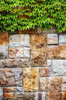 Tło ściany grunge z liśćmi