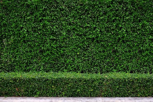 Tło ściany ogrodzenia roślin roślin
