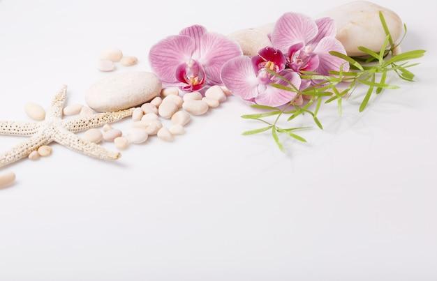 Tło spa z białymi kamieniami i fioletową orchideą na białym tle