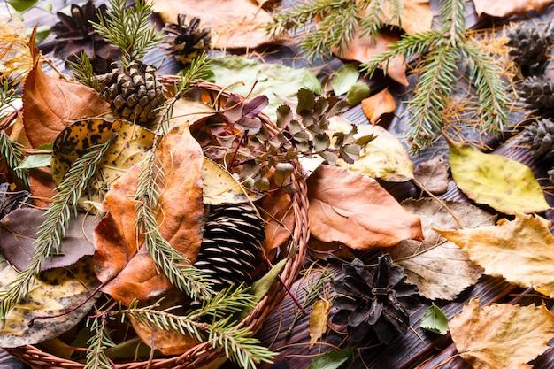 Tło suchych liści i szyszek