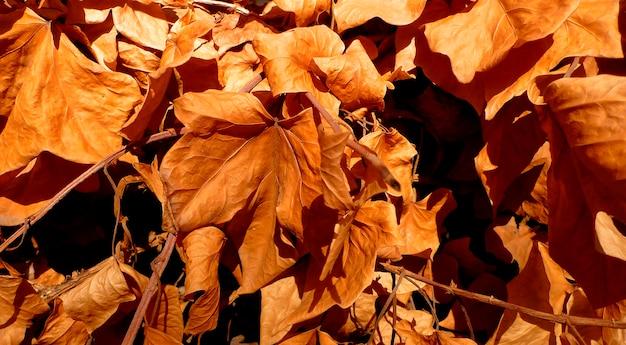 Tło suchych liści jesienią